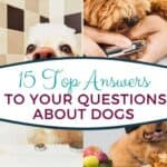 15 Answers to your Questions about Dogs
