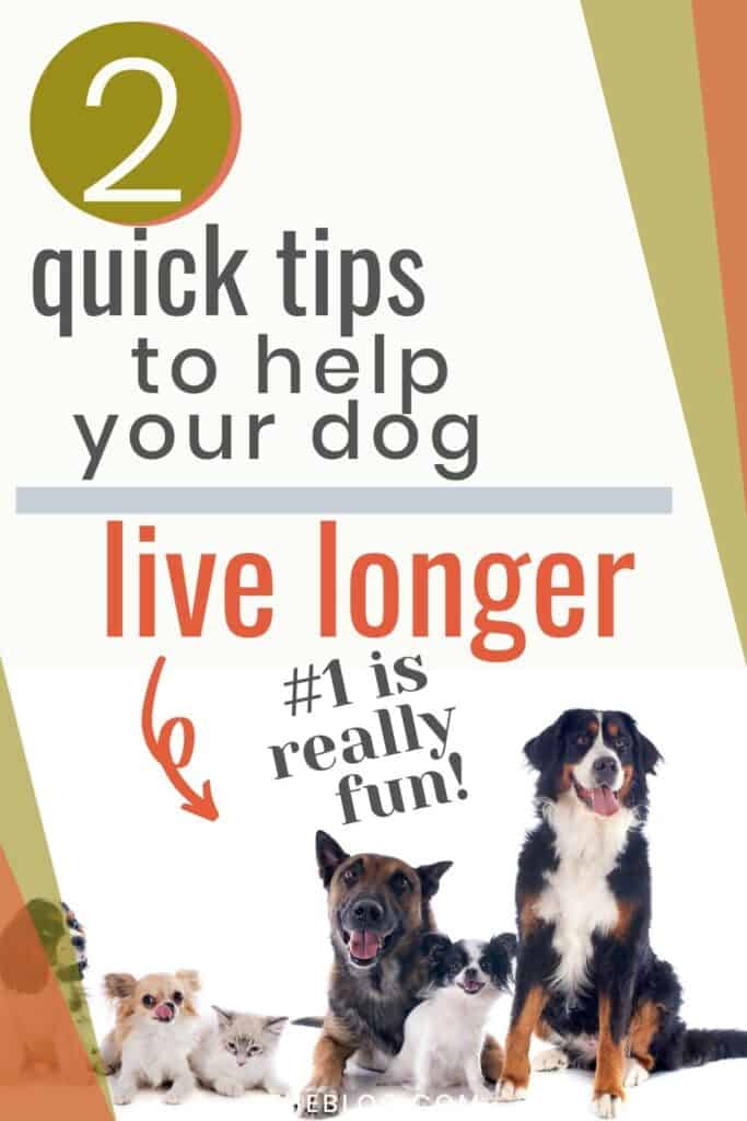 2 Quick Tips to Help your Dog Live Longer