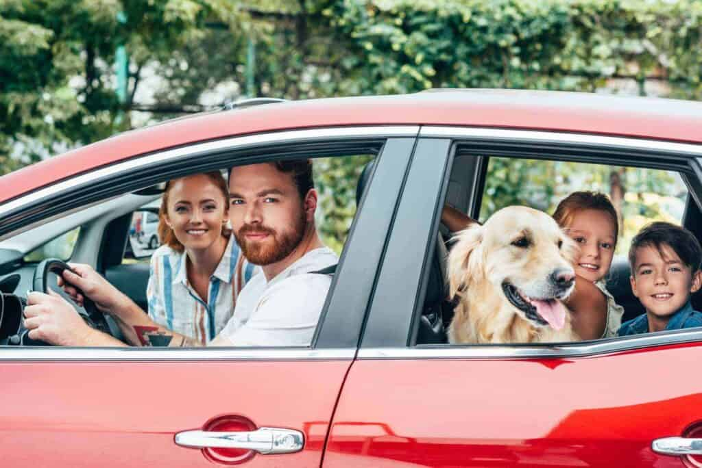 Dog in car with kids