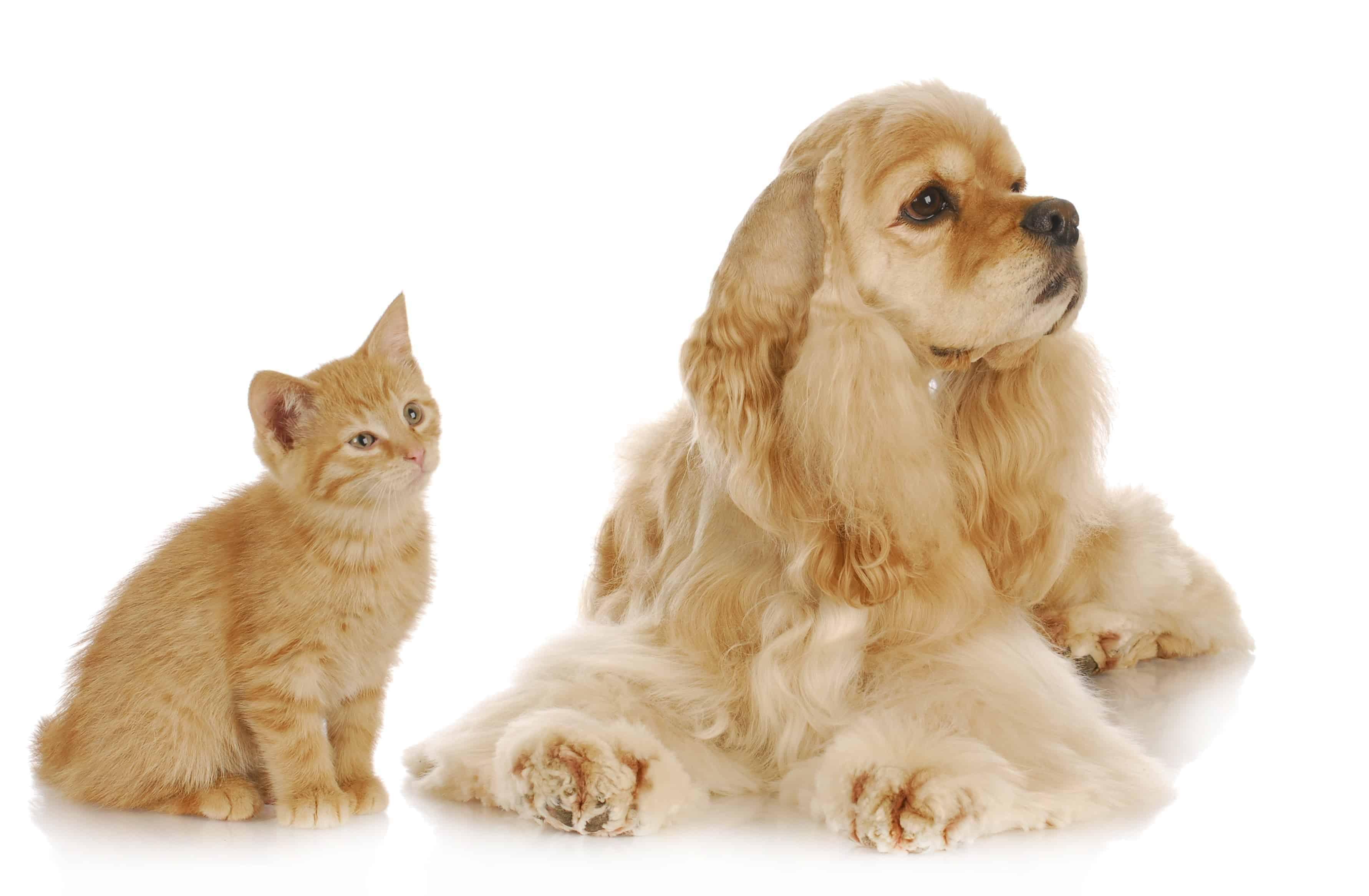 Dog Training Club Name Ideas