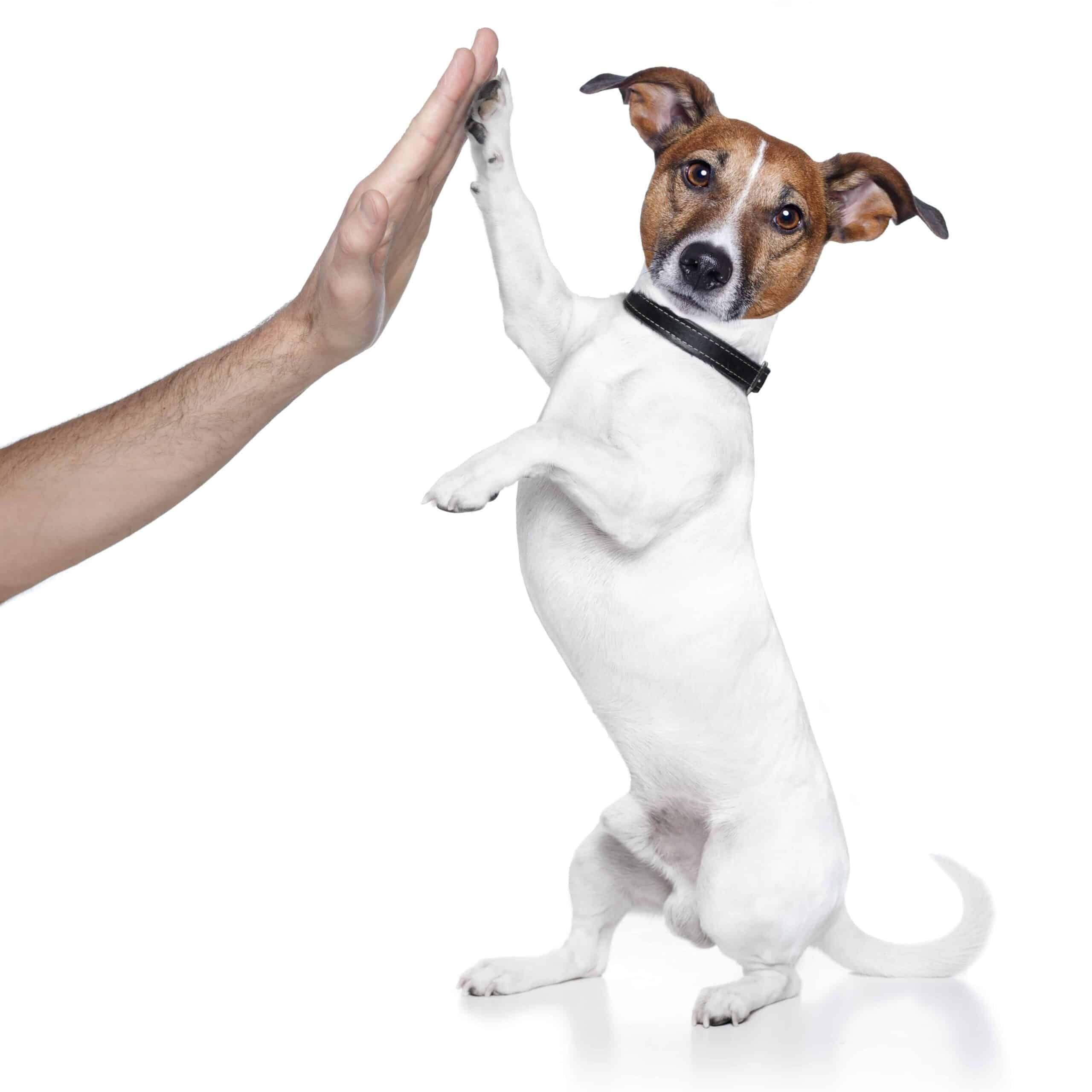 dog high five, #dog, #dog high five