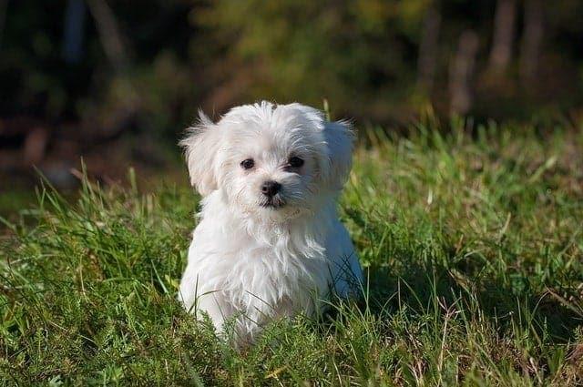 dog names puppies