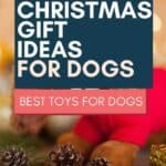 5 Christmas Ideas for Dogs