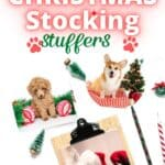Best Stocking Stuffers for Dogs