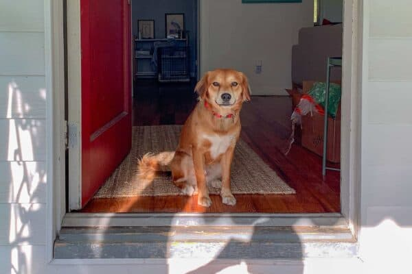 9-Best-House-Cleaning-Tips-for-a-Shedding-Dog