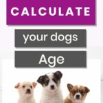 Calculate dogs age