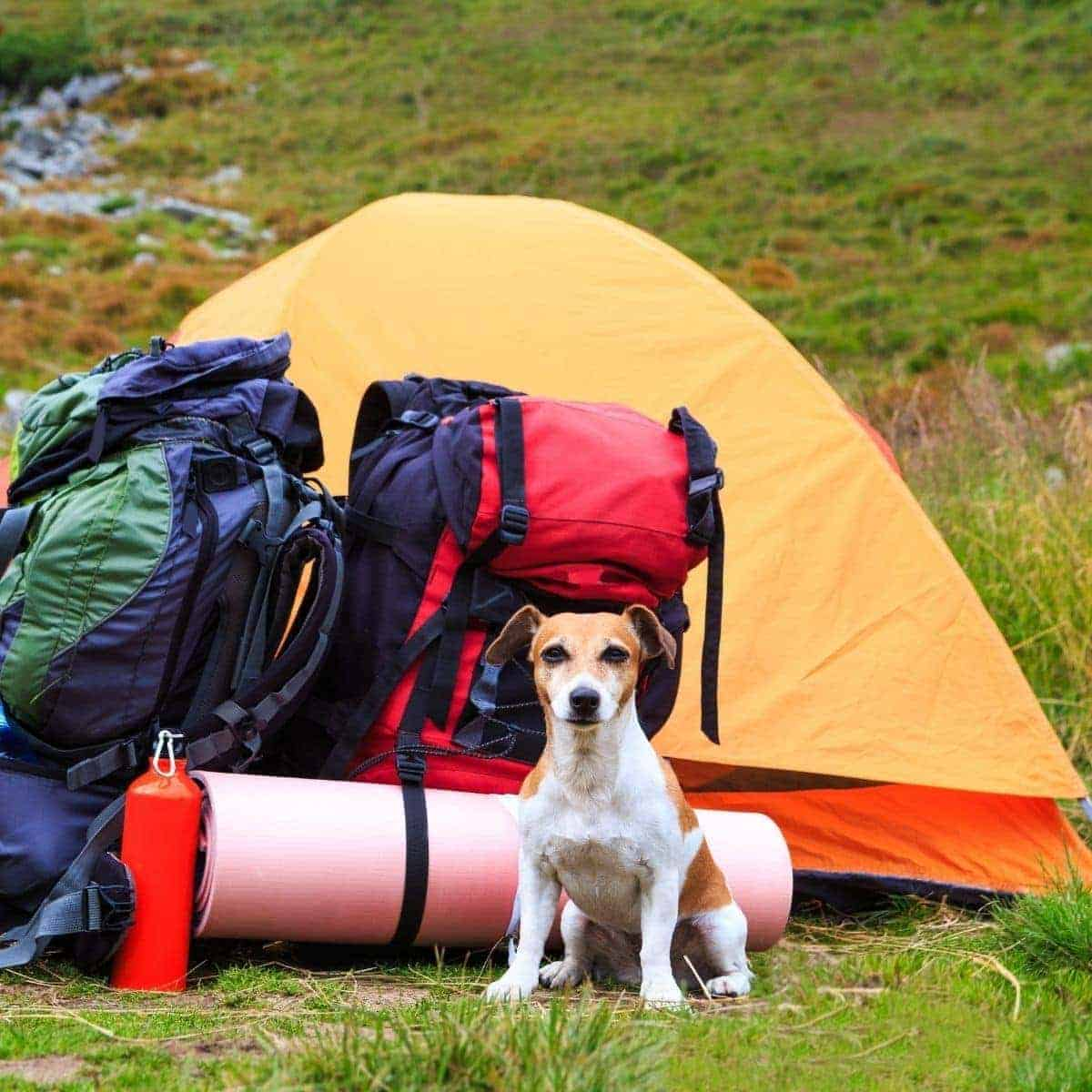 Pet proof your tent camping with dogs