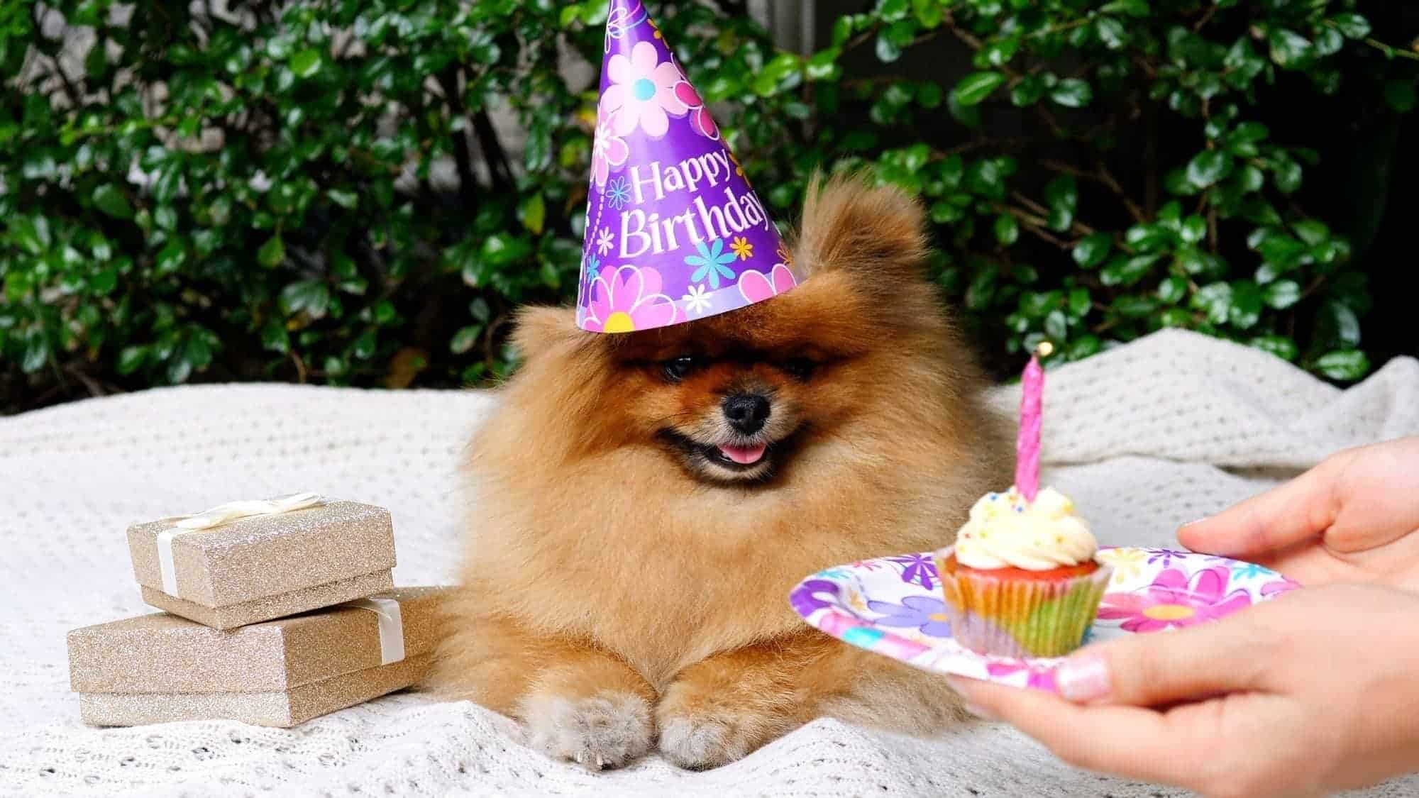 cute dog with a cupcake