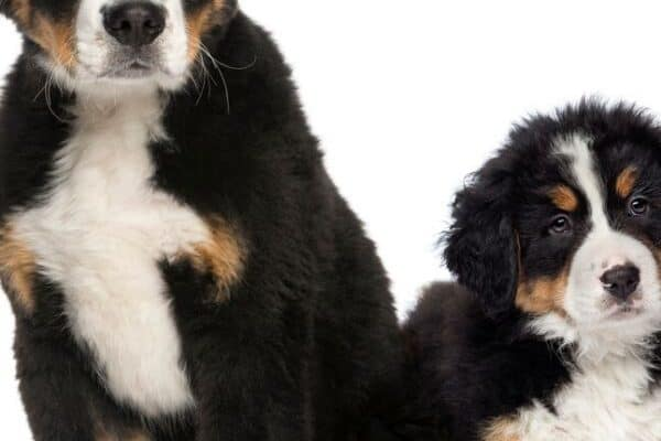 Calculate a Dogs Age