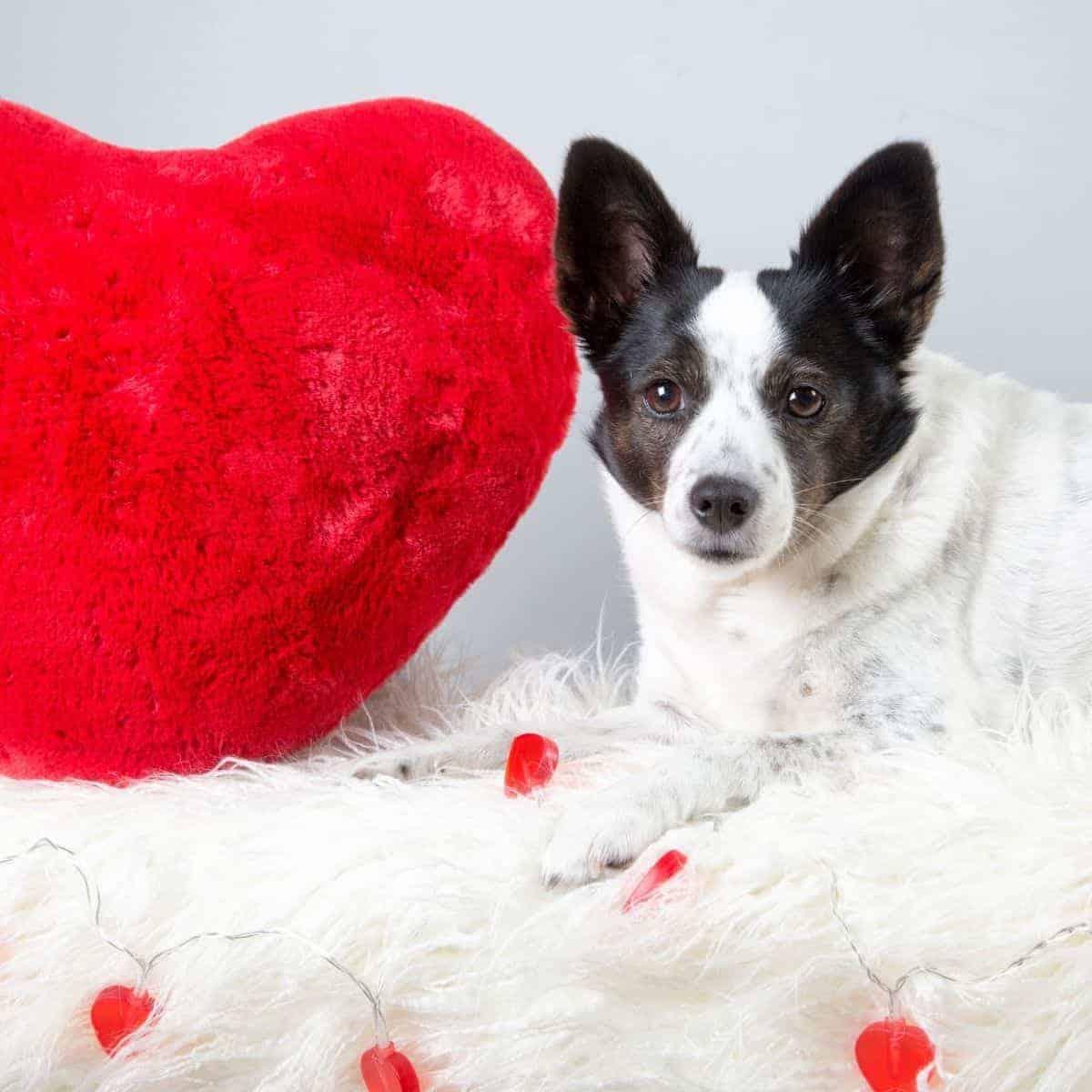 Dog's Valentine's Day