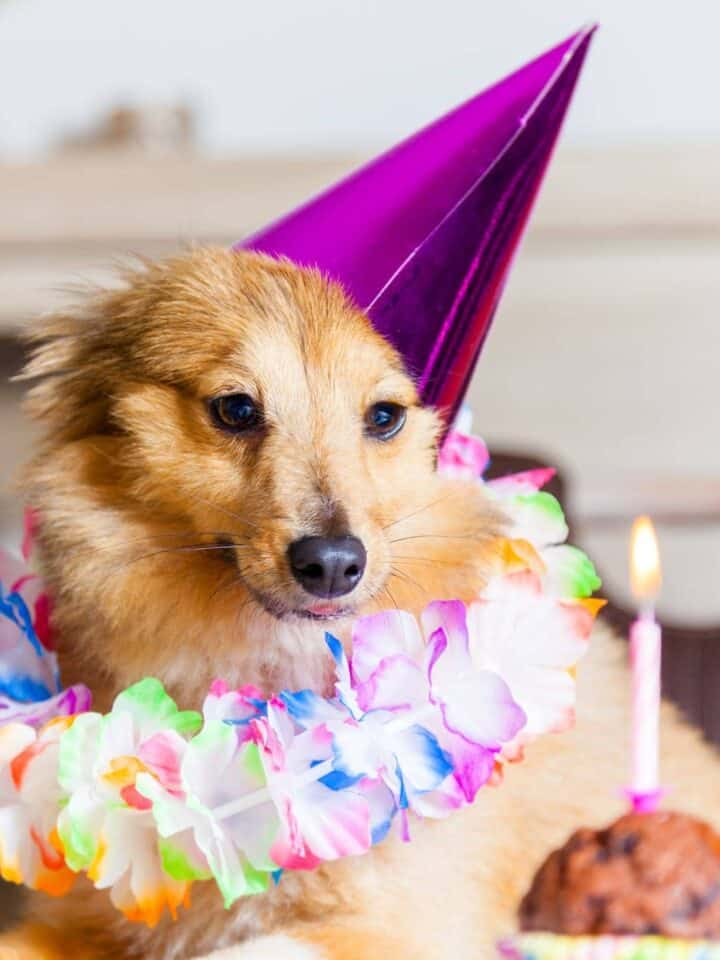 5 Best Dogs Birthday Cakes Mixes