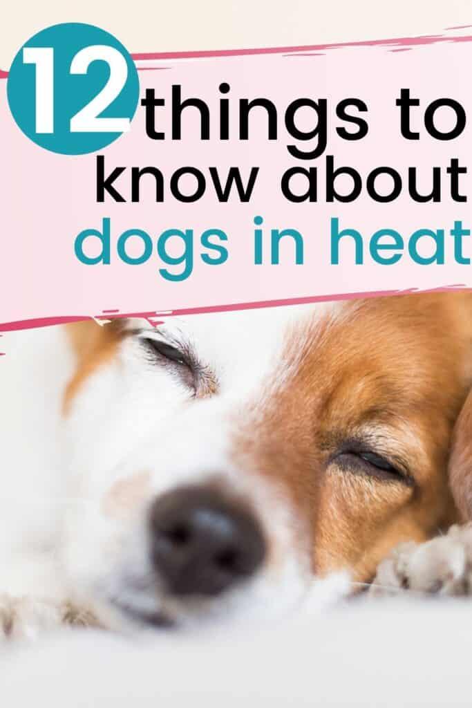 Dogs in Heat