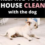 house cleaning tips for dogs