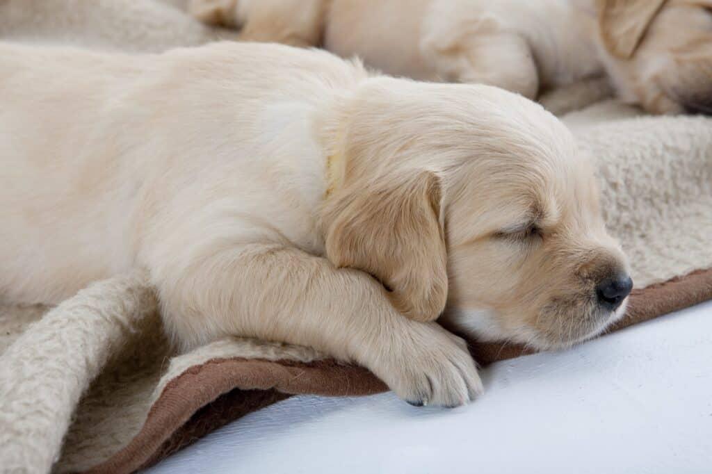 Help Puppy Sleep Through the Night