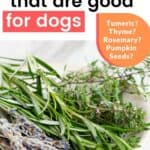 26 Herbs That Are Good for Dogs