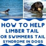 How to Help Limber Tail in Dogs