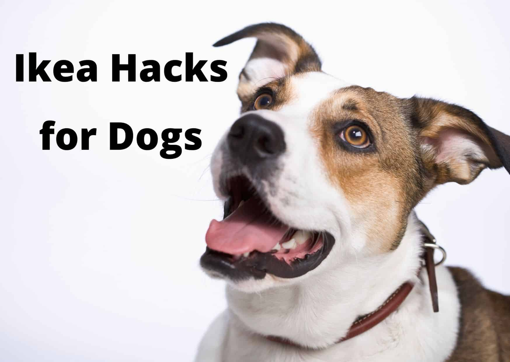 DIY Ikea Hacks for dogs