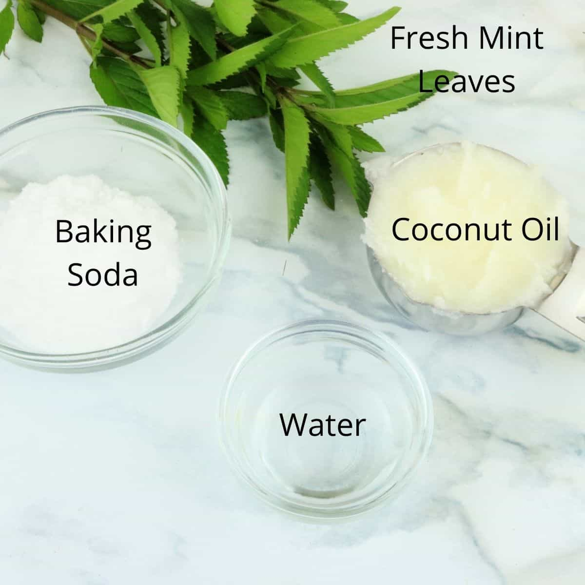 Ingredients Minty Fresh Dog Friendly Toothpaste