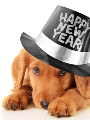 Pet Safety for New Years