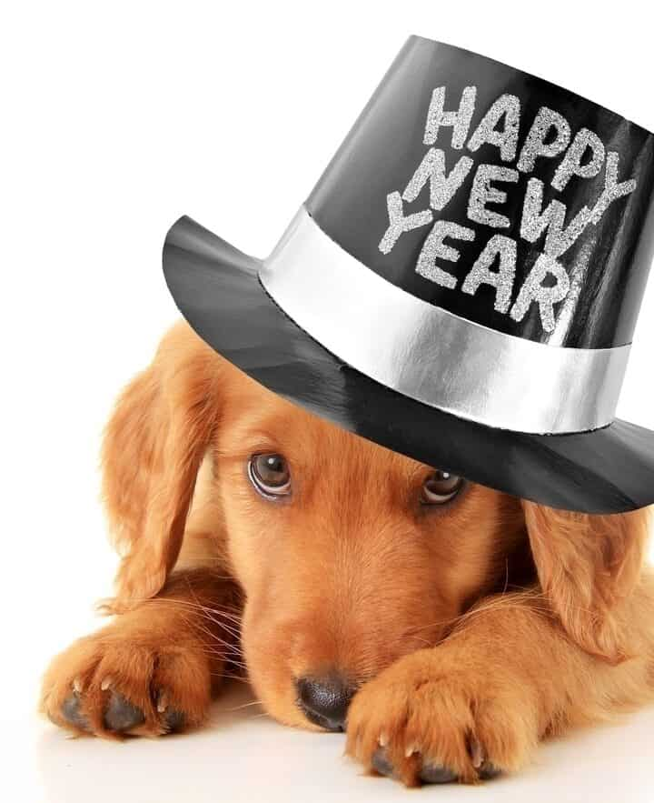 Easy New Years Safety Tips for your Dogs