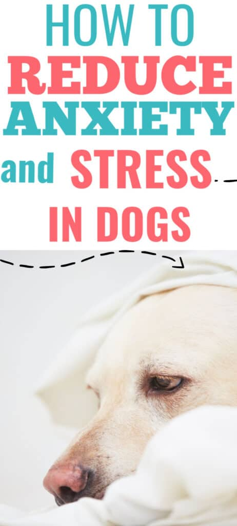 PIN Anxiety and stress dogs