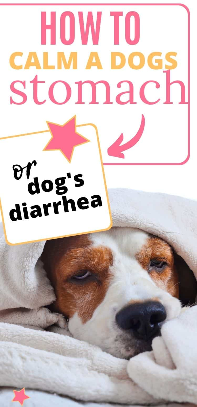 PIN Dogs Diarrhea