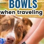 dog bowls for traveling