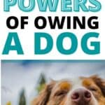 POWERS OF OWING A DOG