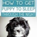 puppy sleep through the night PIN