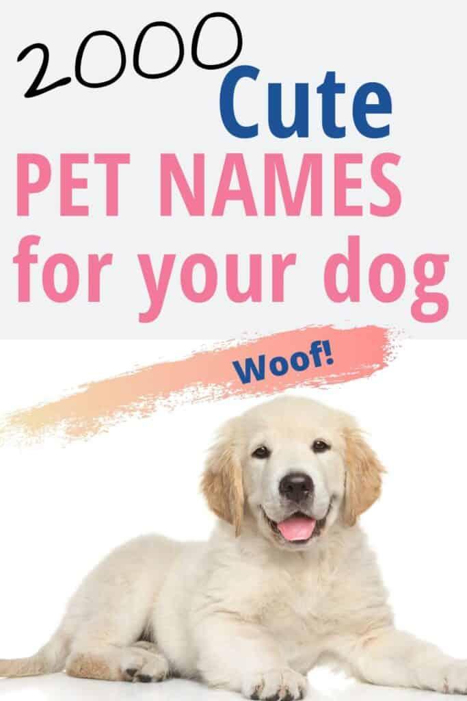 Pet Names