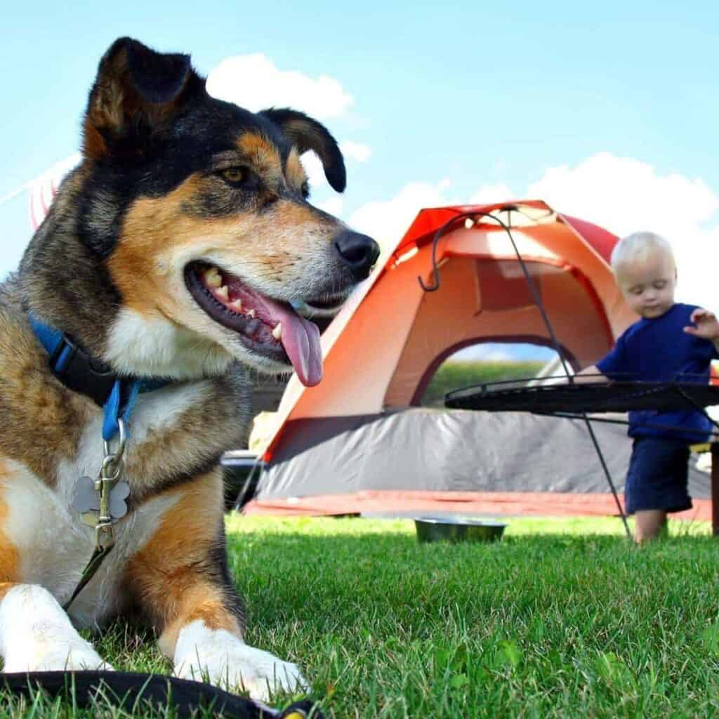 dog with tent