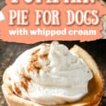Pumpkin Pie for dogs PIN