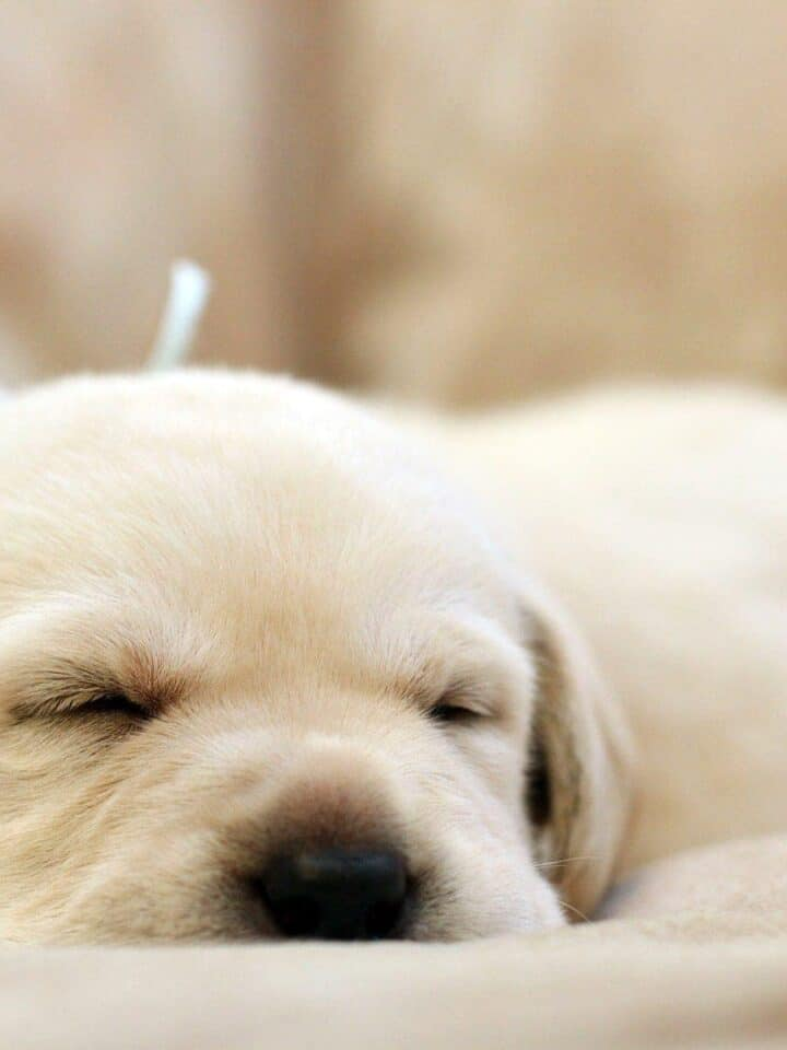 4 Easy Ways to Help Your Puppy Sleep Through the Night