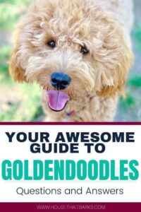 Top 17 Easy goldendoodle answers