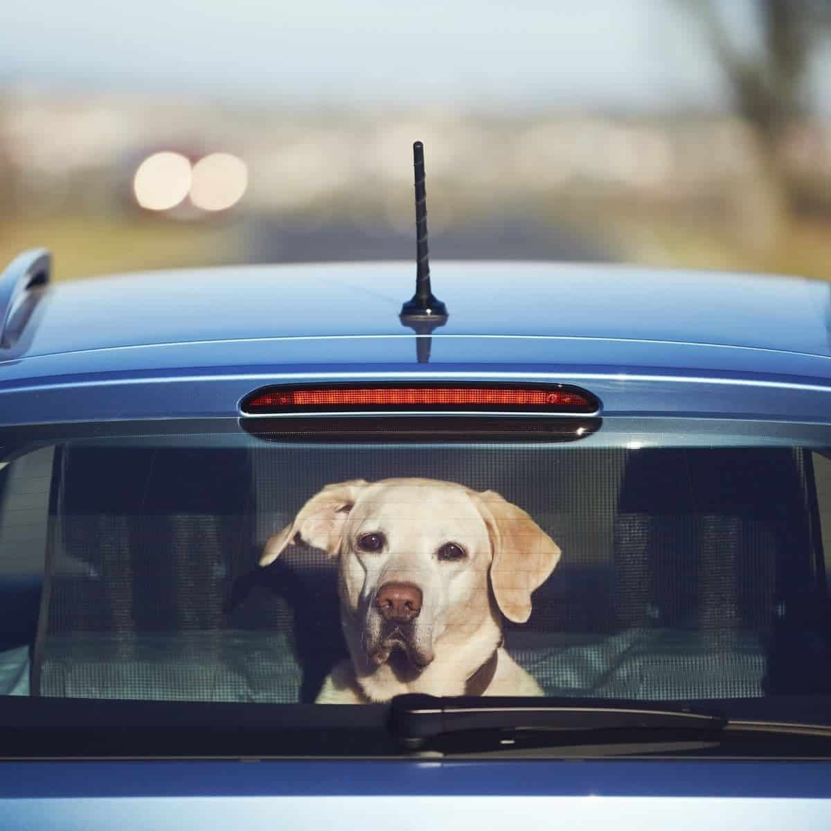 Travel products with dog
