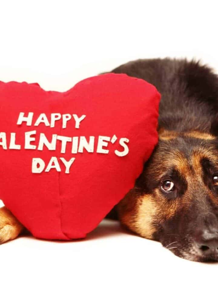 7 Ways to Spoil your Dog's Valentine's Day