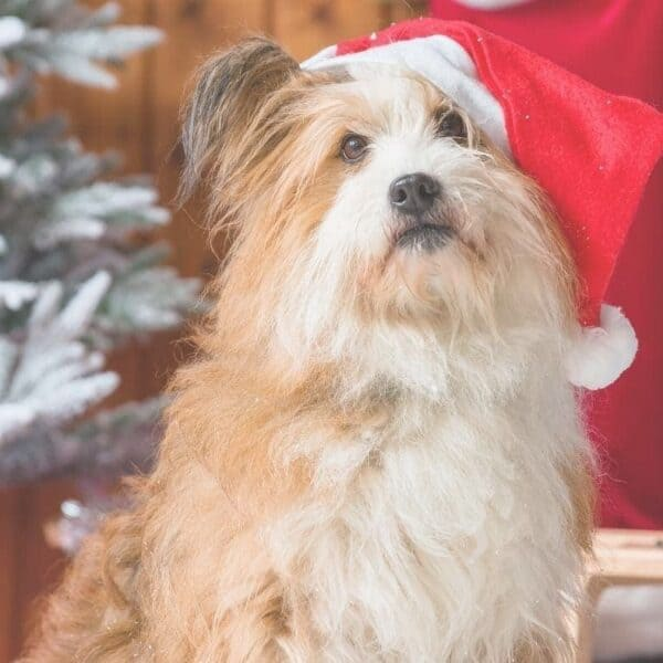 What's on your dogs holiday list?