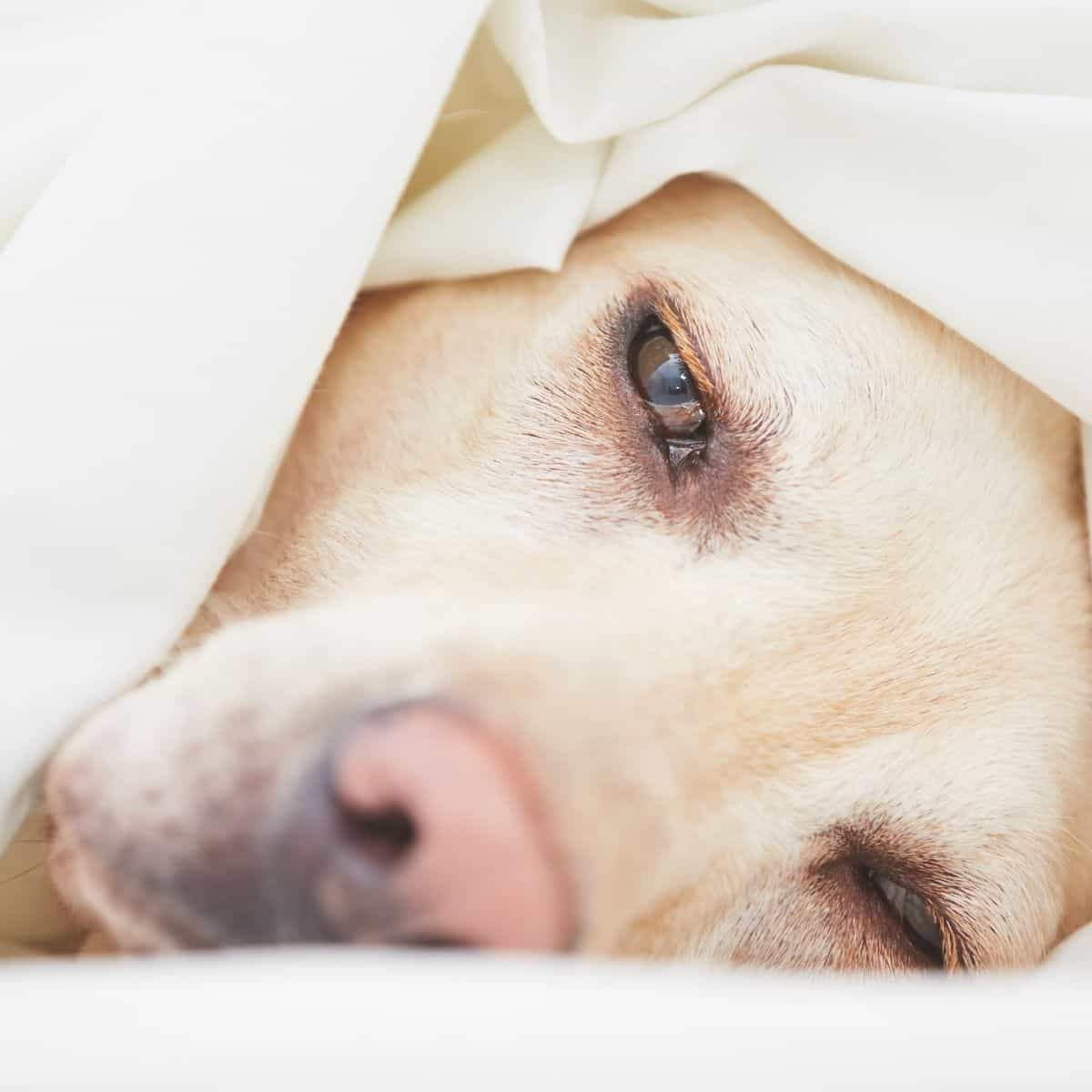 anxiety and stress in dogs