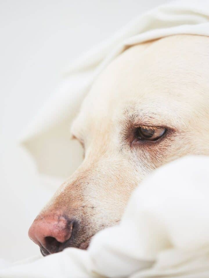 How to Reduce Anxiety and Stress in Dogs