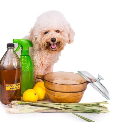 13 Benefits of Apple Cider Vinegar for Dogs