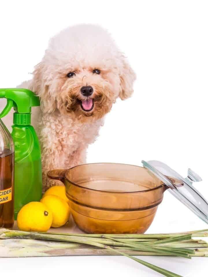 13 Benefits of Apple Cider Vinegar for Dogs