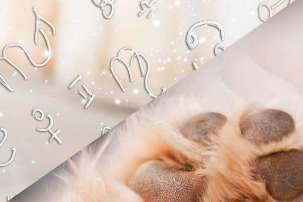 astrology for dogs