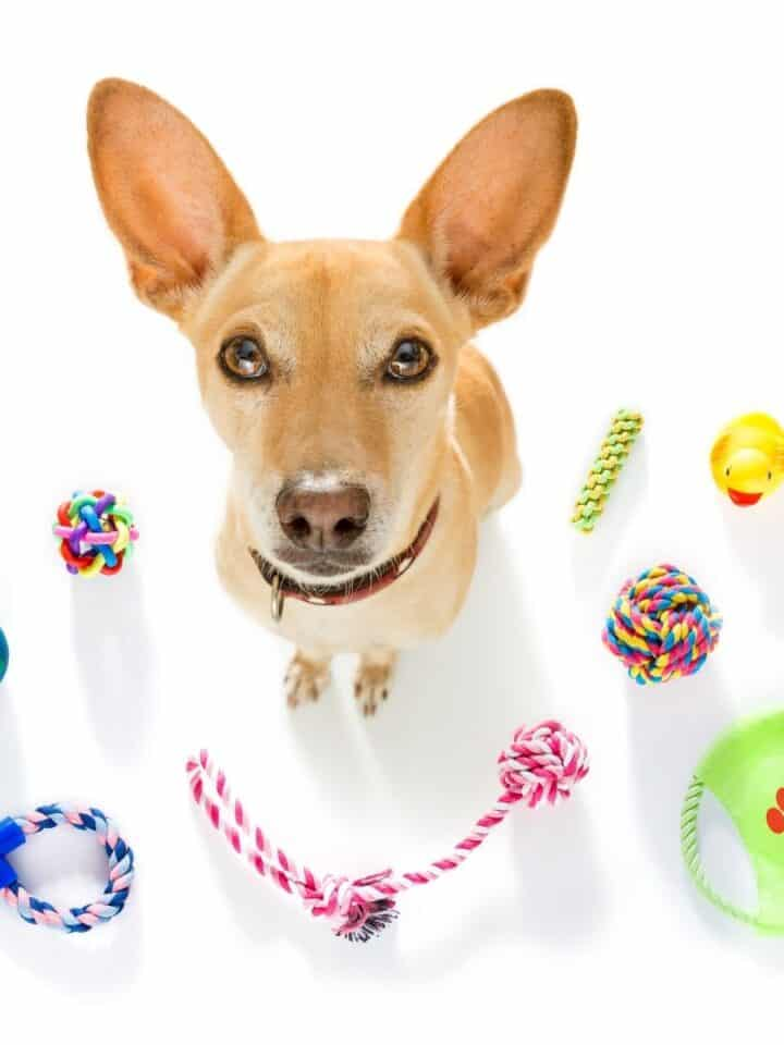 17 of The Best of Dog Toys for Puppies