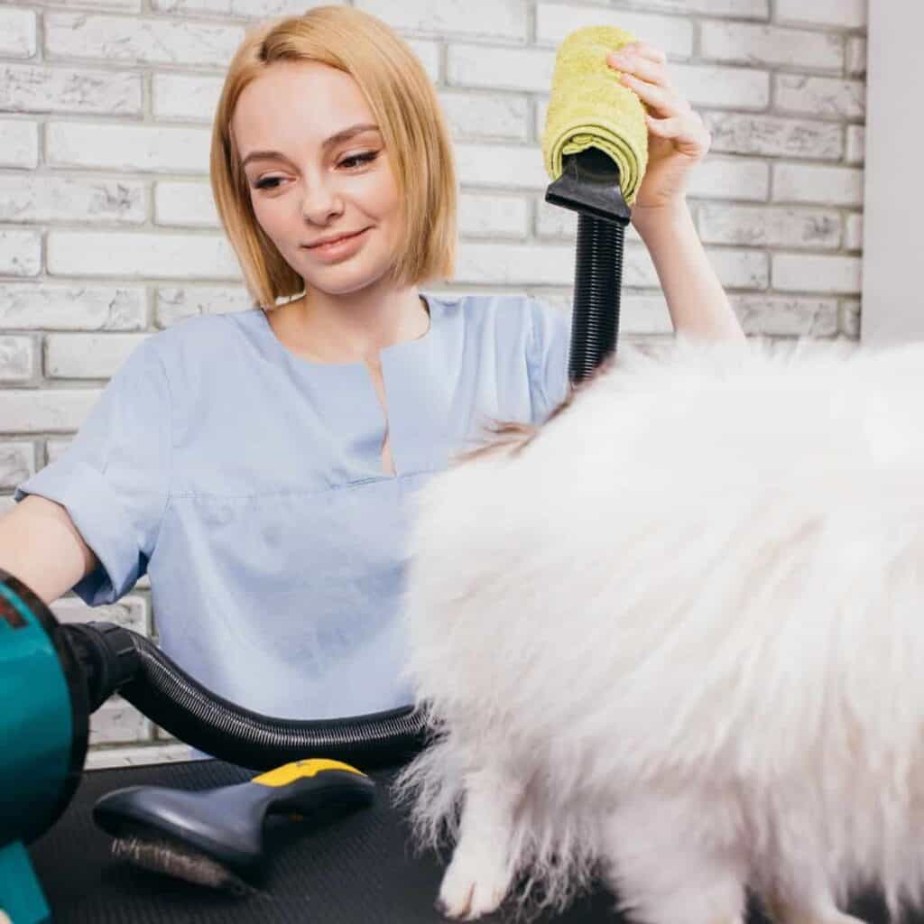 blow drying a dog