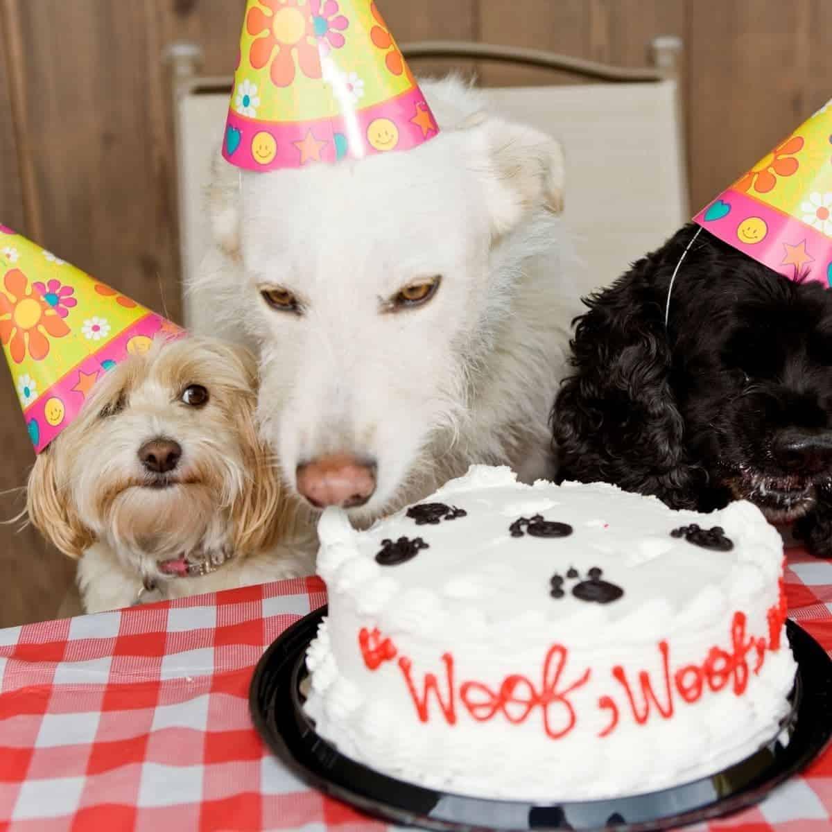 dogs birthday