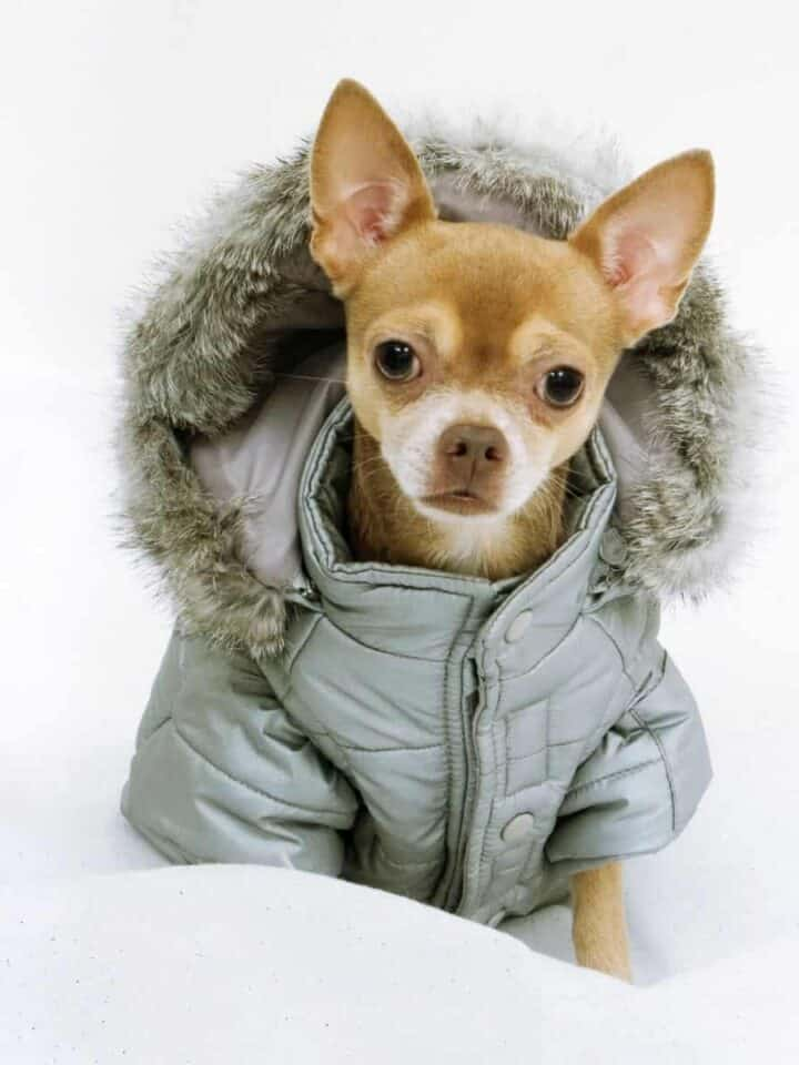 7 Best Cold Weather Coats for your Dog
