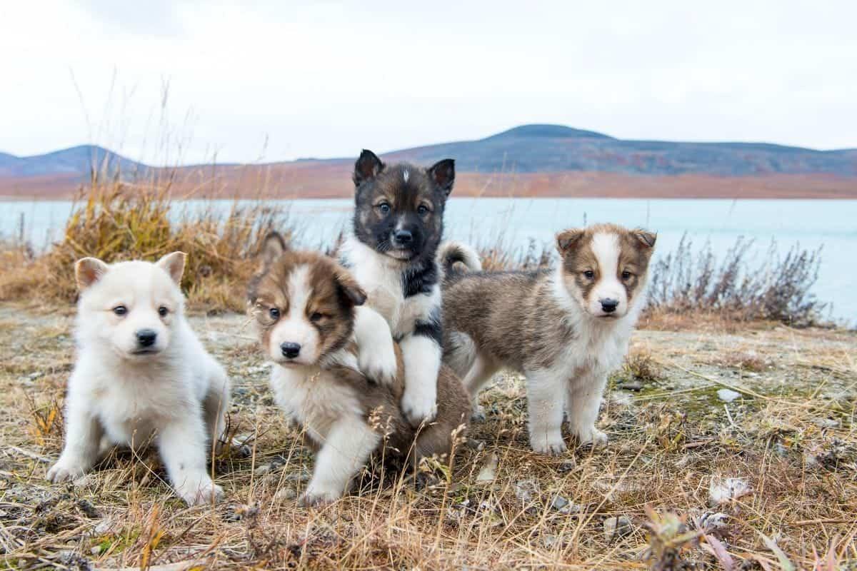 cute puppy names