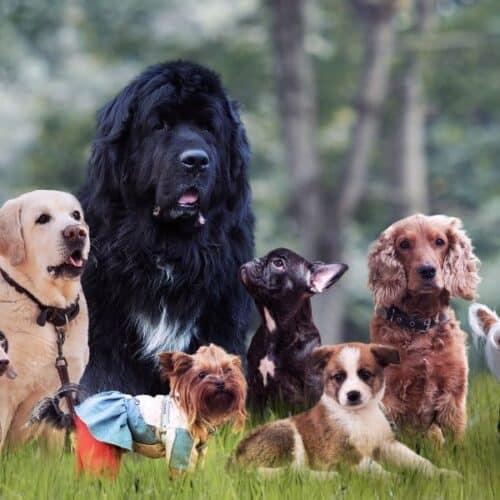 35 Least Active Dog Breeds