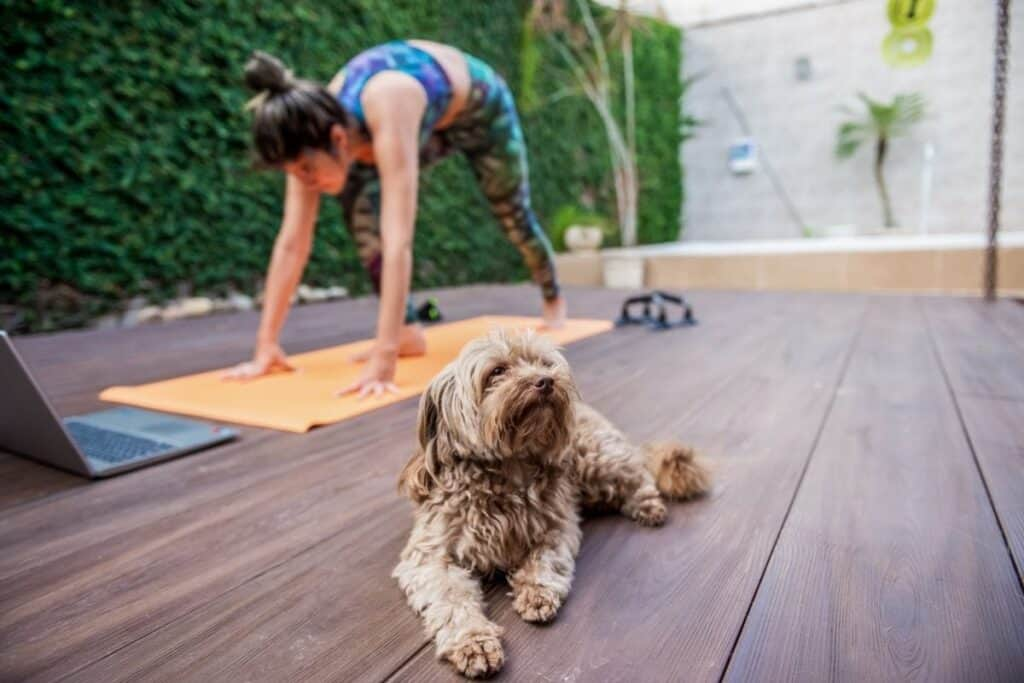 getting fit with dog