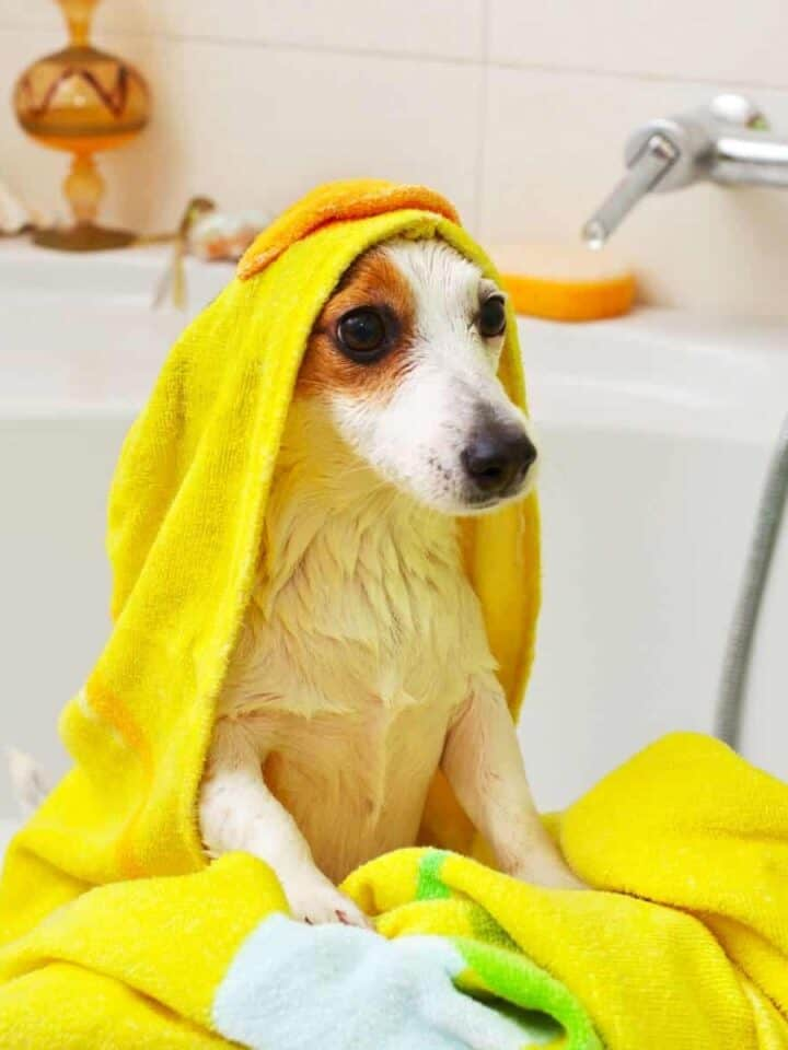 8 Easy Ways to Know When to Give your Dog a Bath